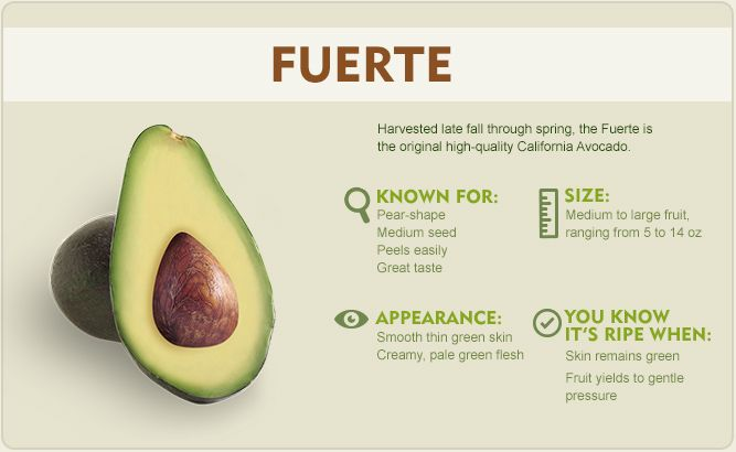 Fuerte Avocado An Established Favorite