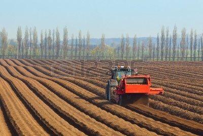 especialista en maquinaria agr�cola que preparar el suelo para la siembra de zanahorias con un tel�n de fondo de �lamos y el cielo azul en primavera photo