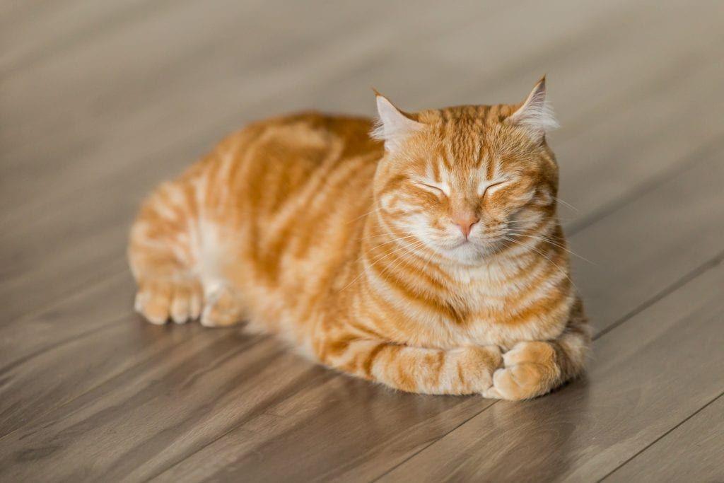 Cat Coat Patterns 10 Interesting Facts That You Ll Love Orange