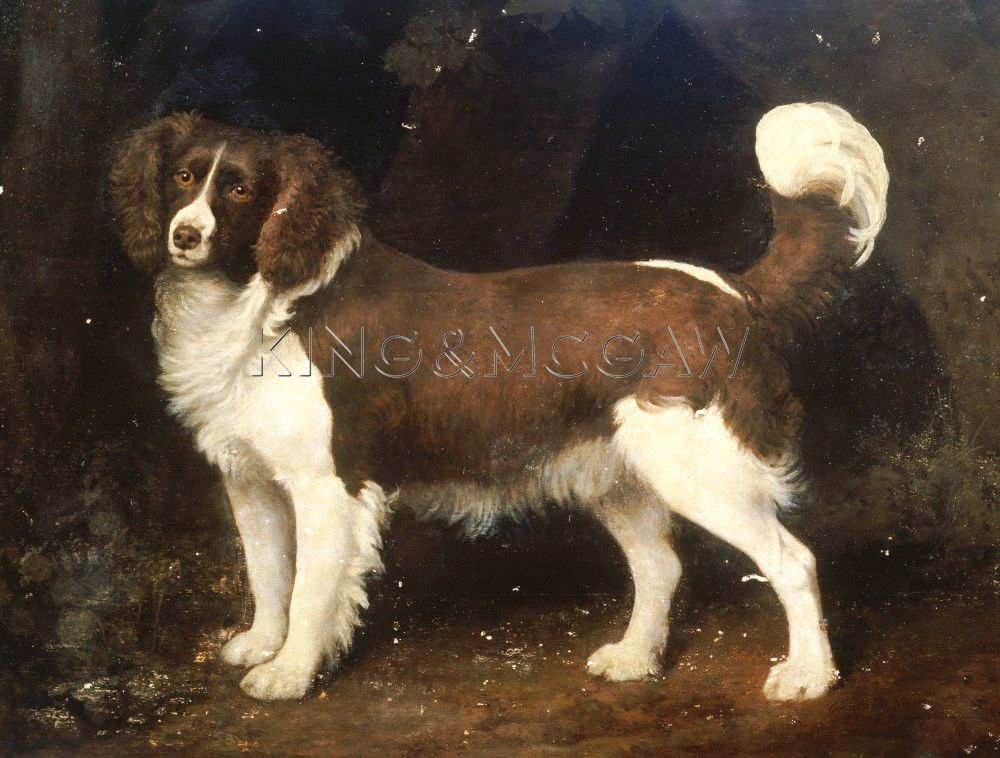 A Spaniel In A Landscape, 1784 Art Print by George Stubbs at King & McGaw