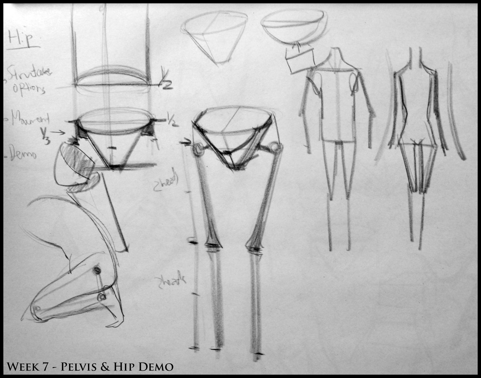 1000 images about anatomy analytical figure drawing sp08 week 7 pelvis hip structure demo