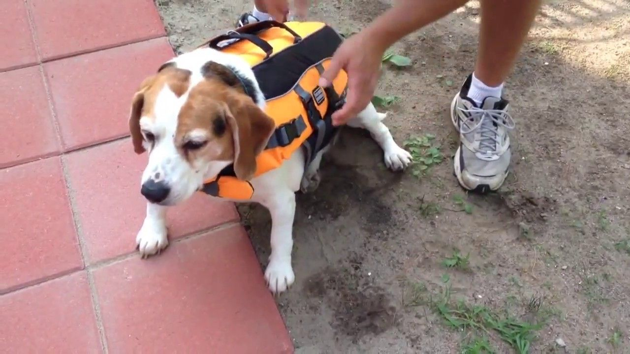 Dog Life Jacket Pets At Home Dog Life Pets Life Jacket