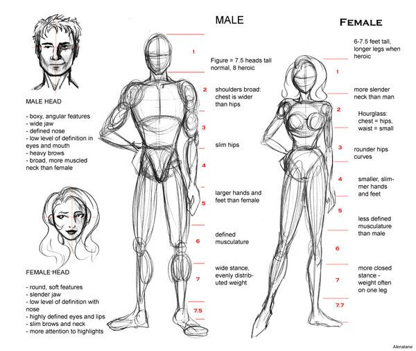 Proportion guide by alenalane drawing tutorials basic for Size and proportion