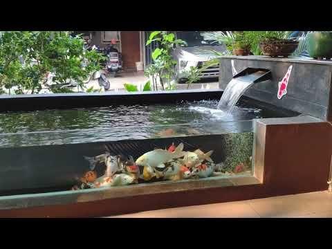 Kolam Koi Minimalis Youtube Garden Pond Design Koi Pond Design Ponds Backyard