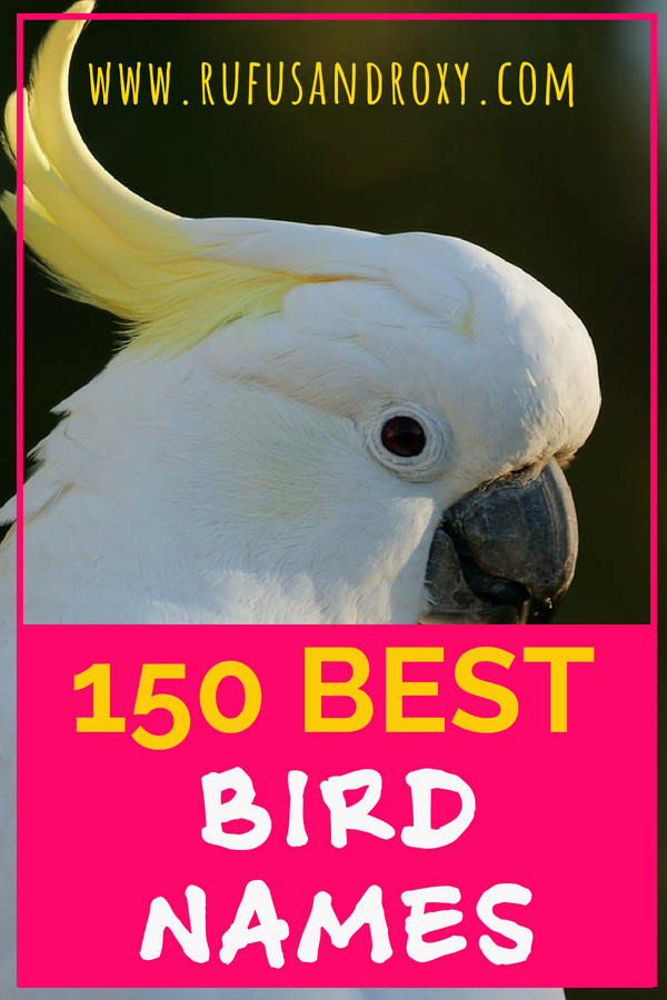 150 Top Bird Names For Your Feathered Friend Bird List Of Birds Pet Names
