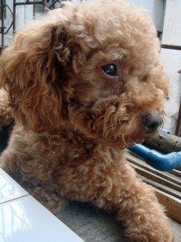 Dog Breeds That Don T Bark Or Shed Dogs Dog Breeds Dog Barking Video