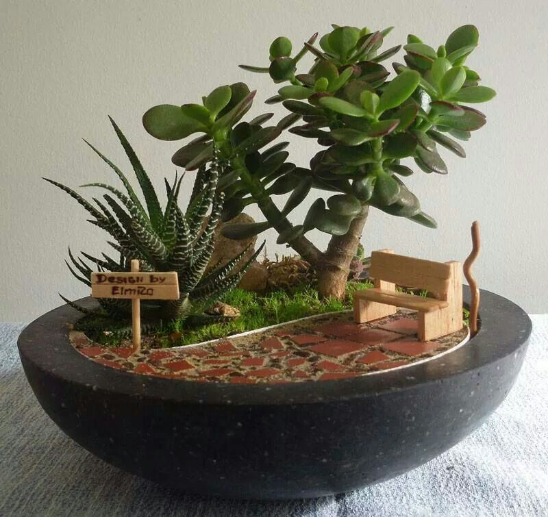 Image Result For Mini Succulent Garden Ideas