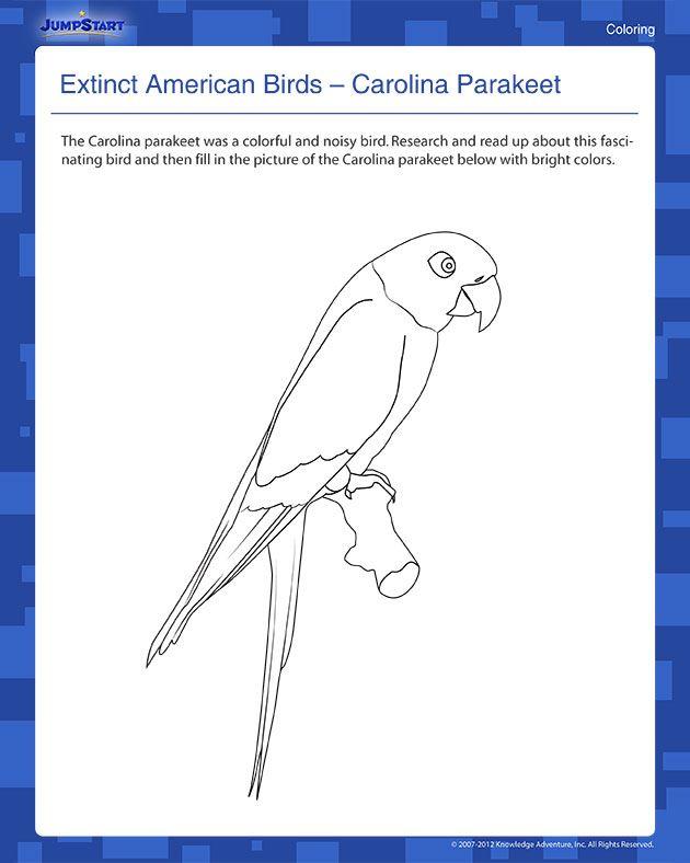 Parrot Math - Book 1: Kindergarten