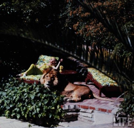 Living with a lion - maybe the most glamorous thing I've ever seen.