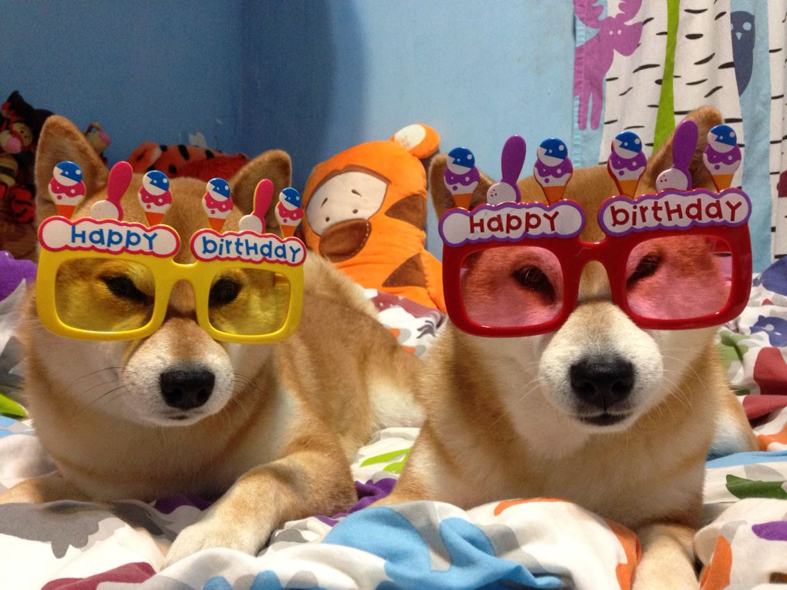 Pin By 感冒 魏 On Shiba Inu Gamo Shiba Inu Shiba Inu Doge Cute Animals