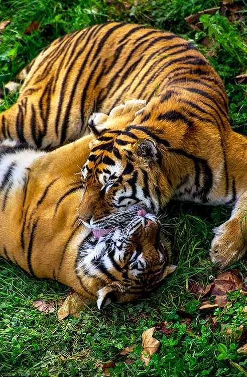 """""""Loving Each Other."""" (Photo By: Fabrizio Pescali)"""