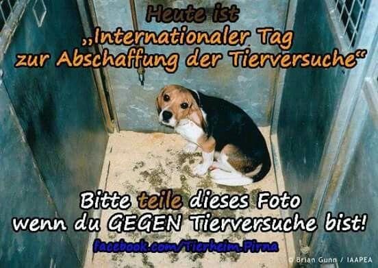 Internationaler Tag zur Abschaffung der Tierversuche