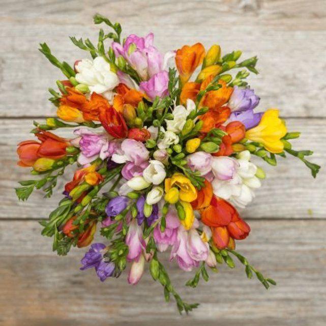 Ace Freesia Flowers Freesia Bouquet Flower Arrangements