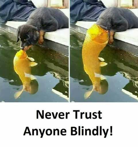 Never Trust Any One Blindly Http Ift Tt 2yejoba Cute Puppies Cats Animals Fun Quotes Funny Friends Quotes Funny Never Trust
