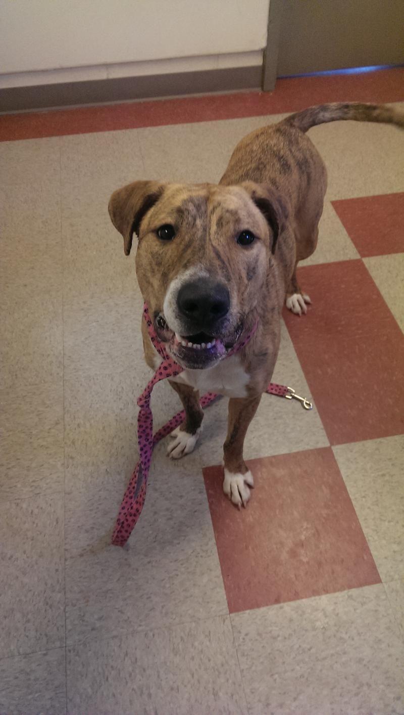 Adopt Lady on Pet adoption center, Animal shelter, Pet
