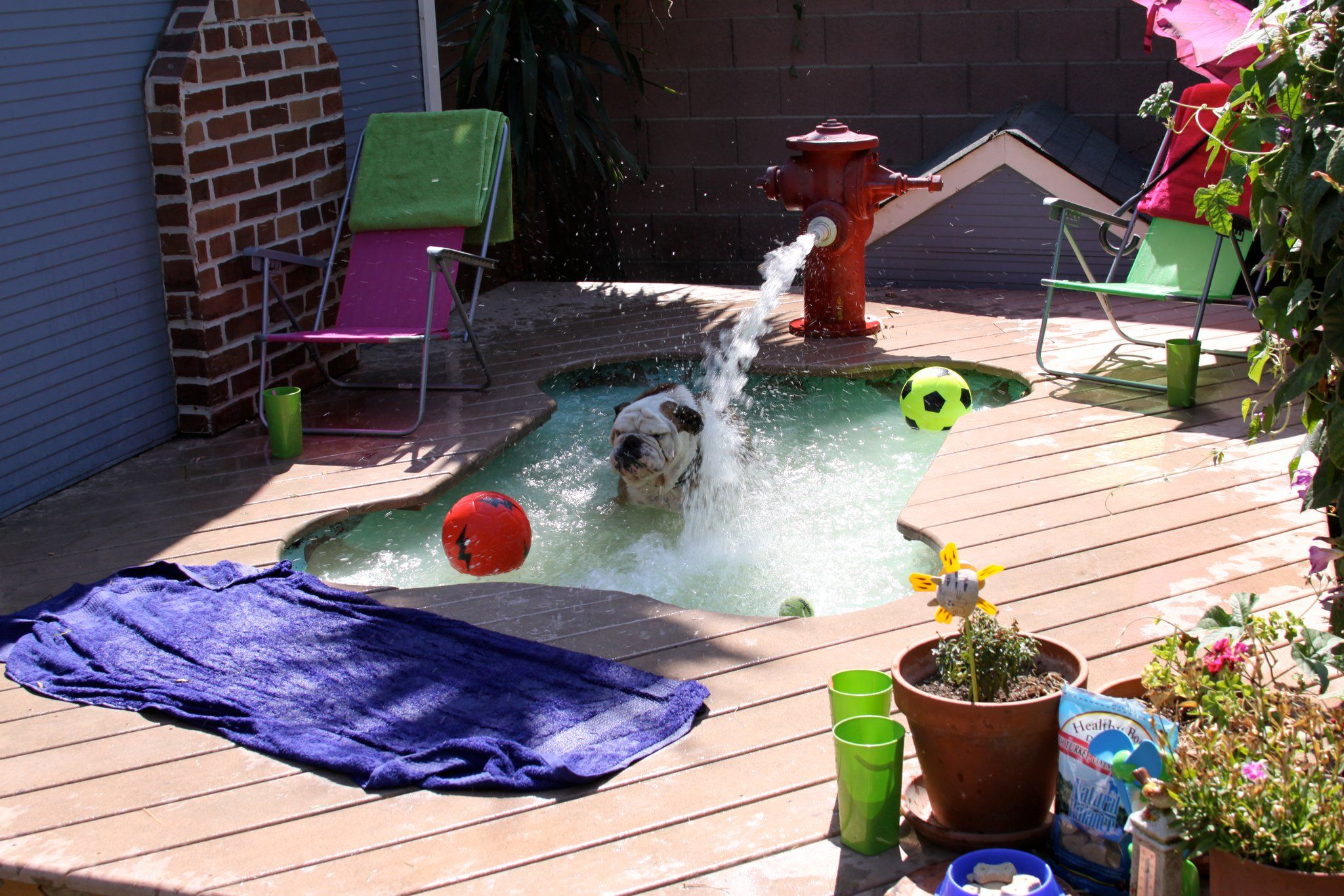 Tillman S Got A Dog Bone Shaped Pool Love The Fire Hydrant Link