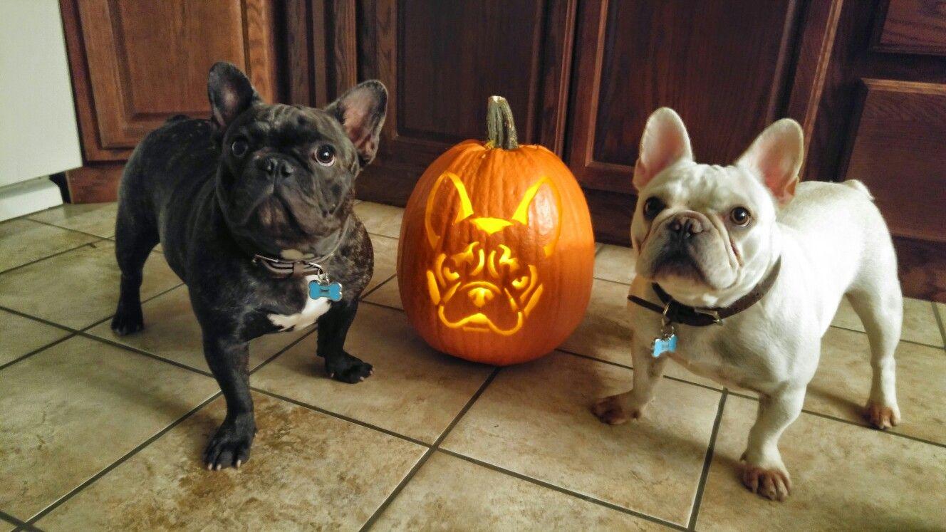 French bulldog pumpkin carvings