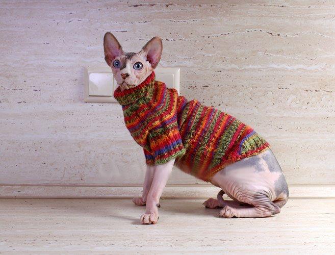 одежда для сфинкса кошки одежда одежда для собак и кошки