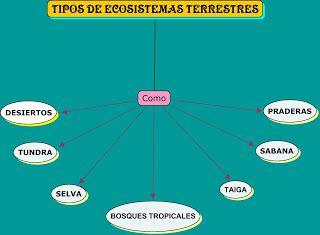 Ecosistemas Terrestres Ecosistemas Terrestres Tipos De Ecosistemas Ecosistemas Tipos De Fosiles