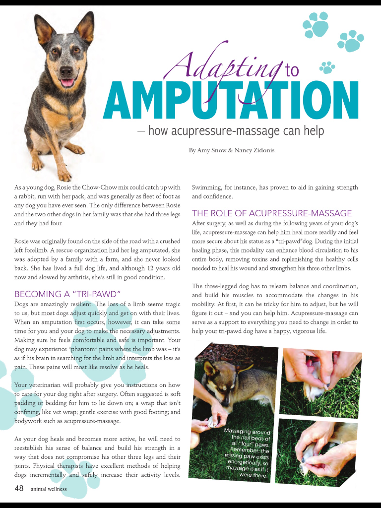 2015 02 07 12 40 36 Png Pet Health Acupressure Adaptations