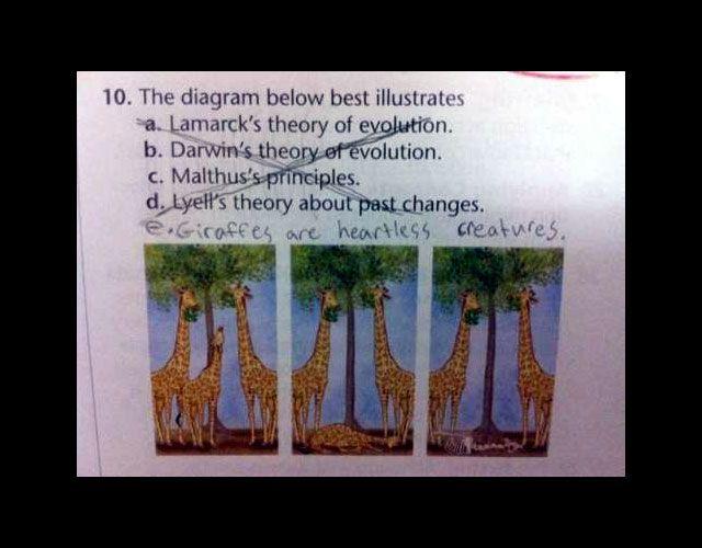 Giraffes are heartless