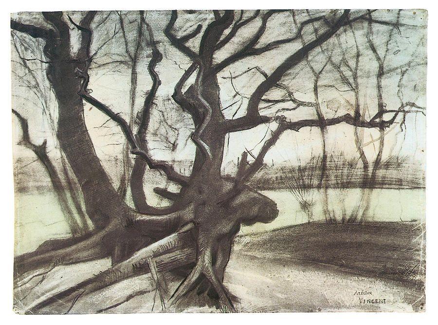 Study Of A Tree By Vincent Van Gogh Van Gogh Drawings Artist