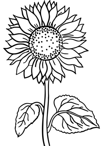 Sunflower Coloring Page In 2020 Printable Flower Coloring Pages Sunflower Coloring Pages Flower Coloring Pages