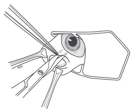 Skills Laboratory: Prolapsed third eyelid gland