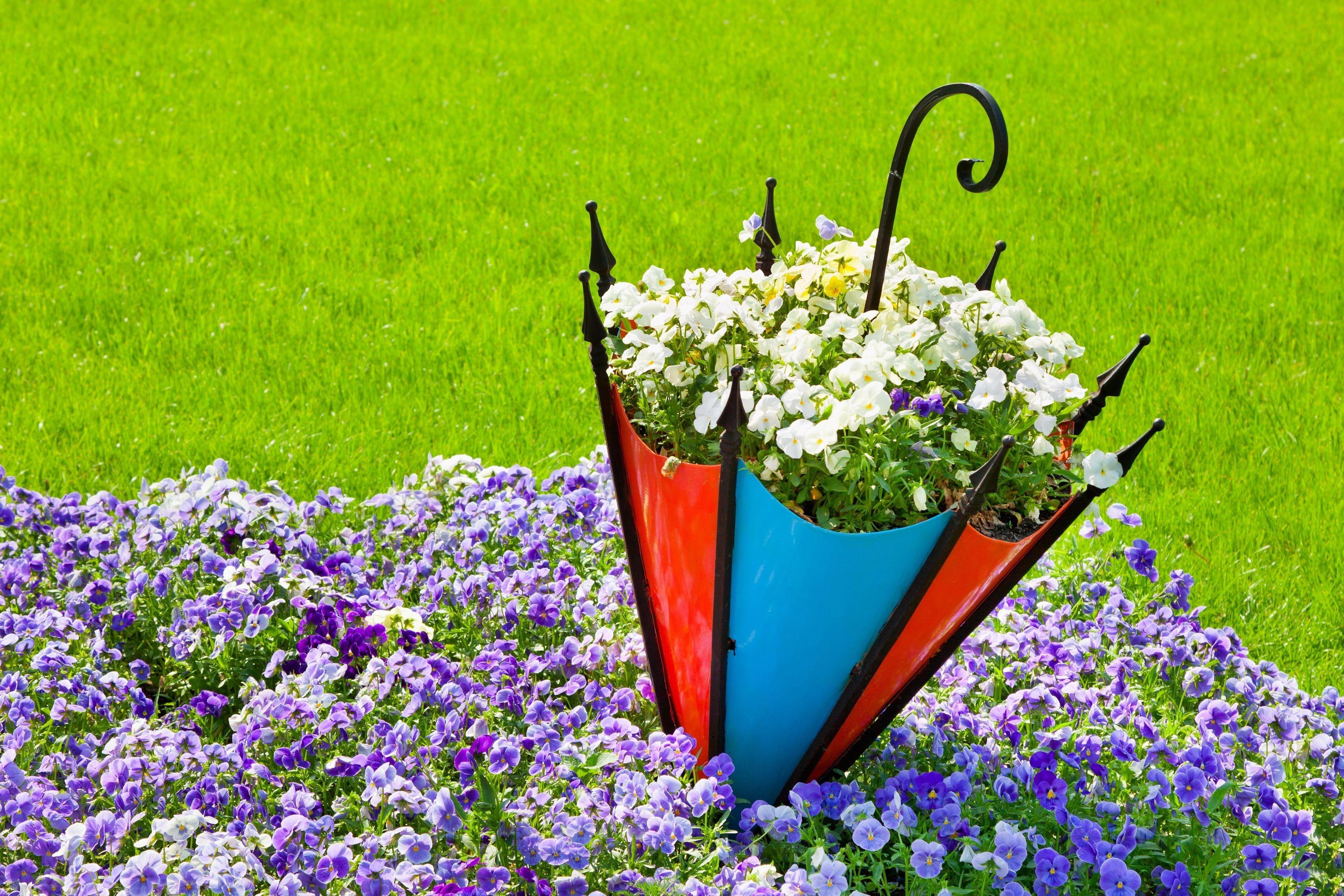 Baixar Wallpaper natureza,  flores,  Flor,  guarda-chuva Papis de parede grtis na resoluo 3831x2554 — quadro №557122