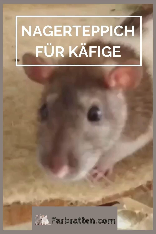 Pin Auf Ratten