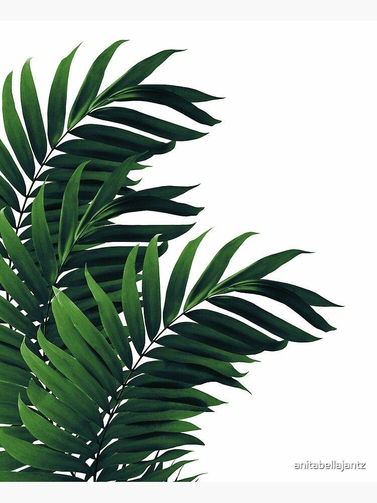 Lienzo ''Hojas de palma Vibra verde tropical # 1 #trópico #decor #arte' de anitabellajantz