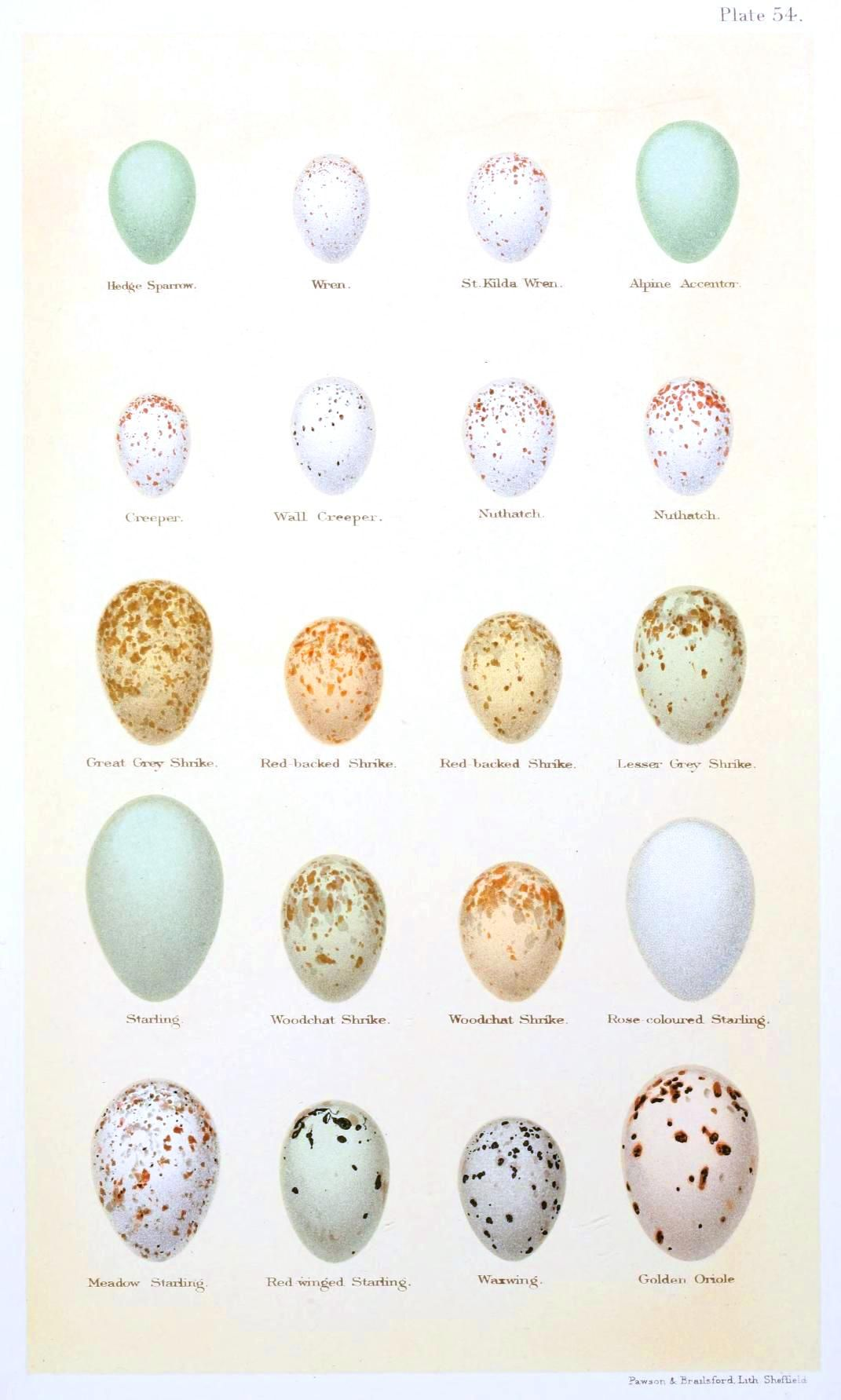 Worksheet Animals And Their Eggs