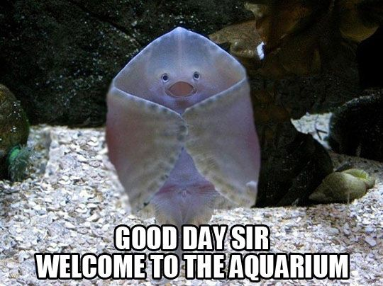 "D'oh! This one got me once. | ""Welcome to my aquarium,"" says a smiling baby undulate ray. Maybe not."