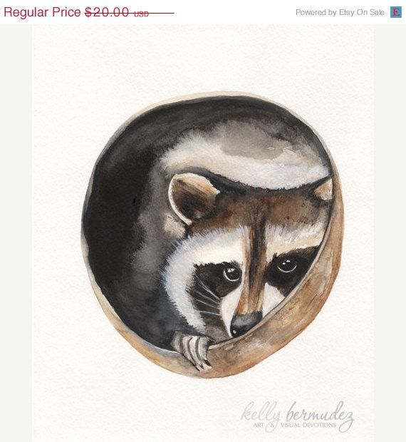 ON SALE Hiding Place / raccoon / nature / by kellybermudez
