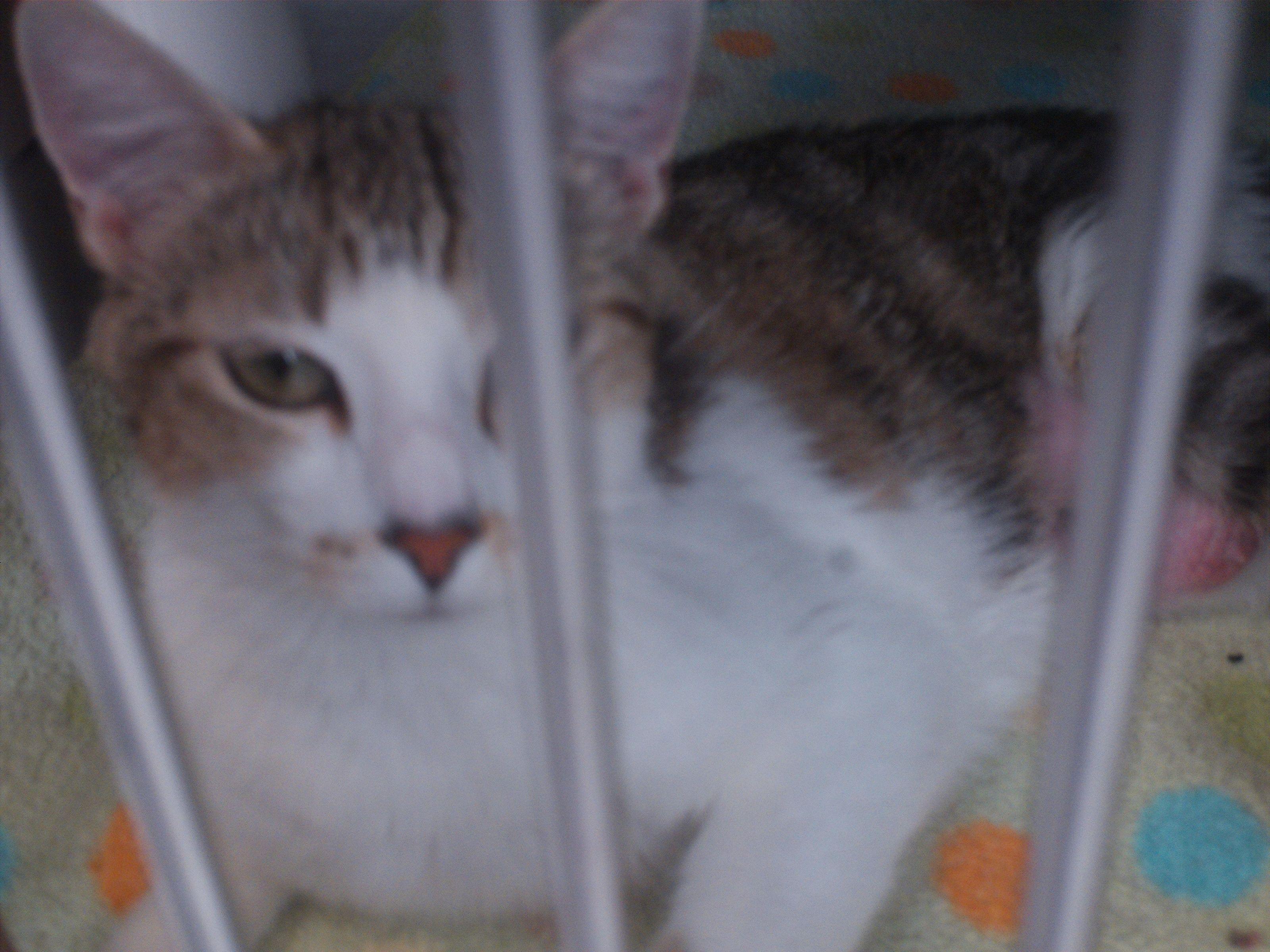 11+ Idaho falls animal shelter images