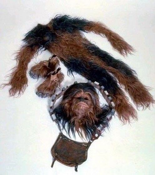 chewie clothes