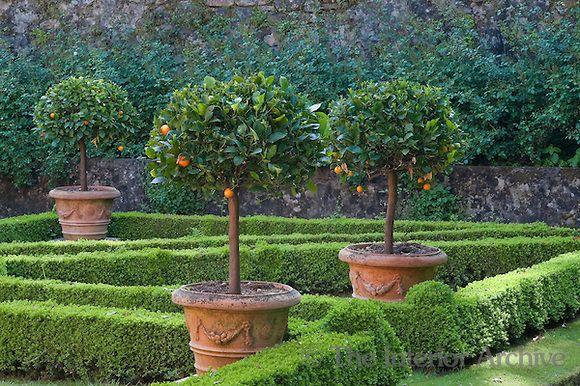 citrus in terra cotta