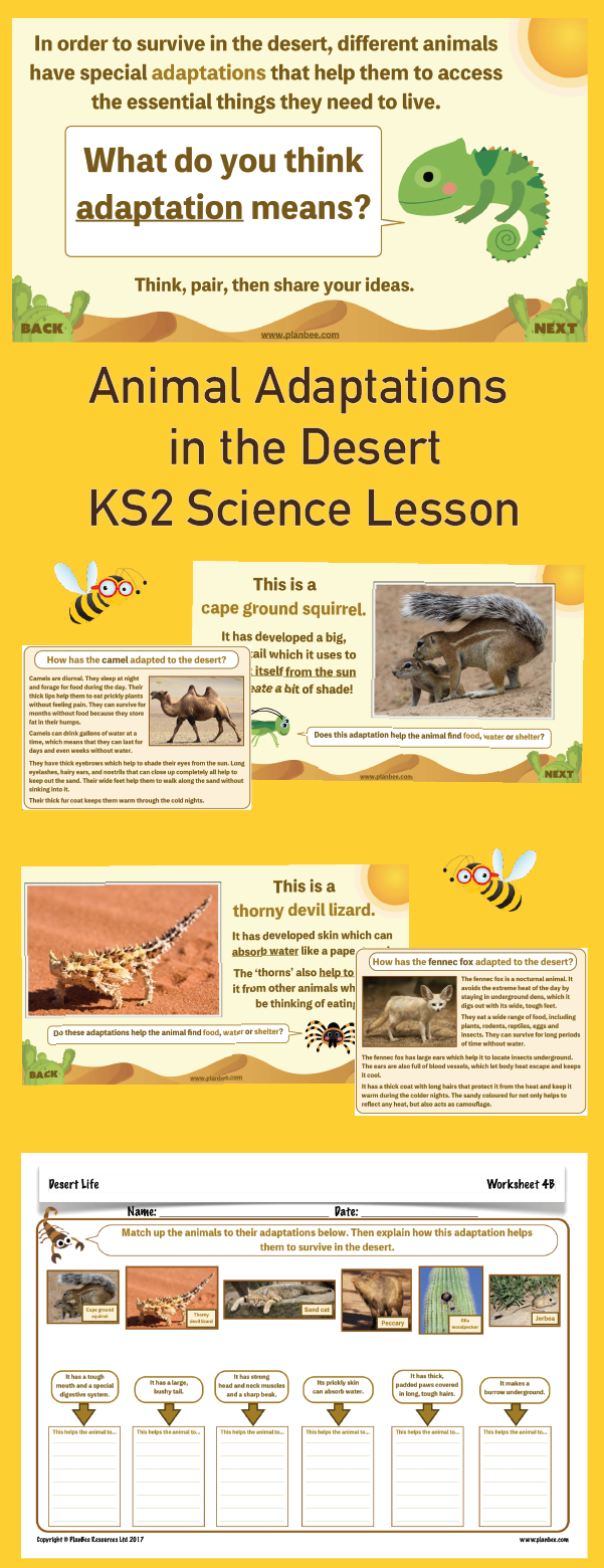 Desert Life Animal Adaptation Animal adaptations, Ks2