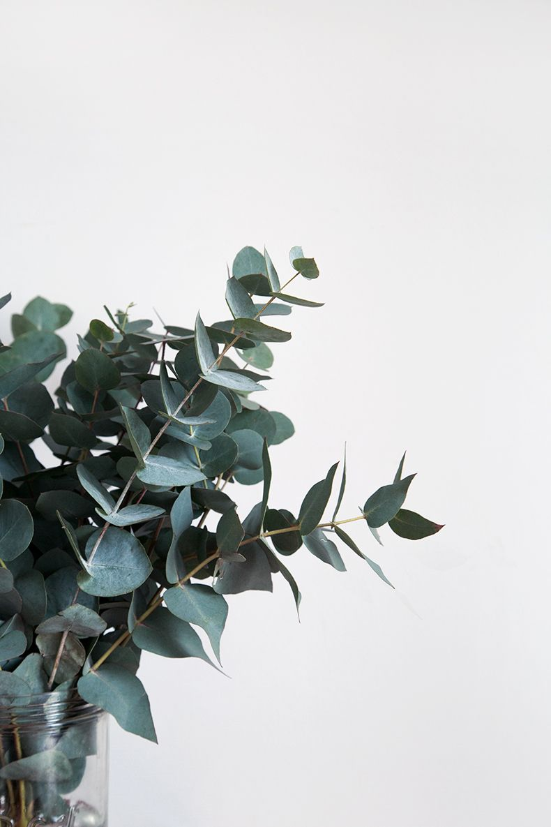 Green l eucalyptus notre green touch de l hiver - Branche d eucalyptus ...