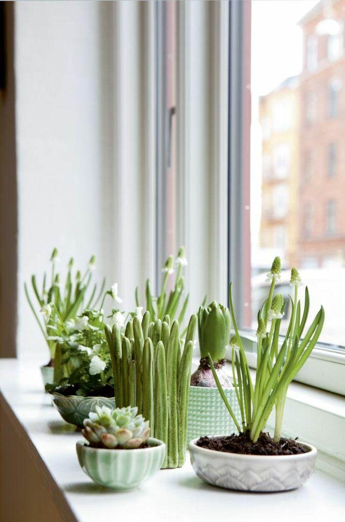 Sukkulenten gekonnt in Szene setzen | Fensterbänke, Dekorieren und ...