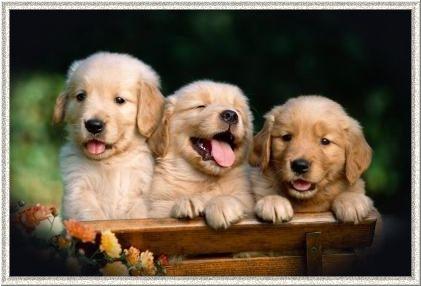 Bom dia! #cachorros #jardim #amizade