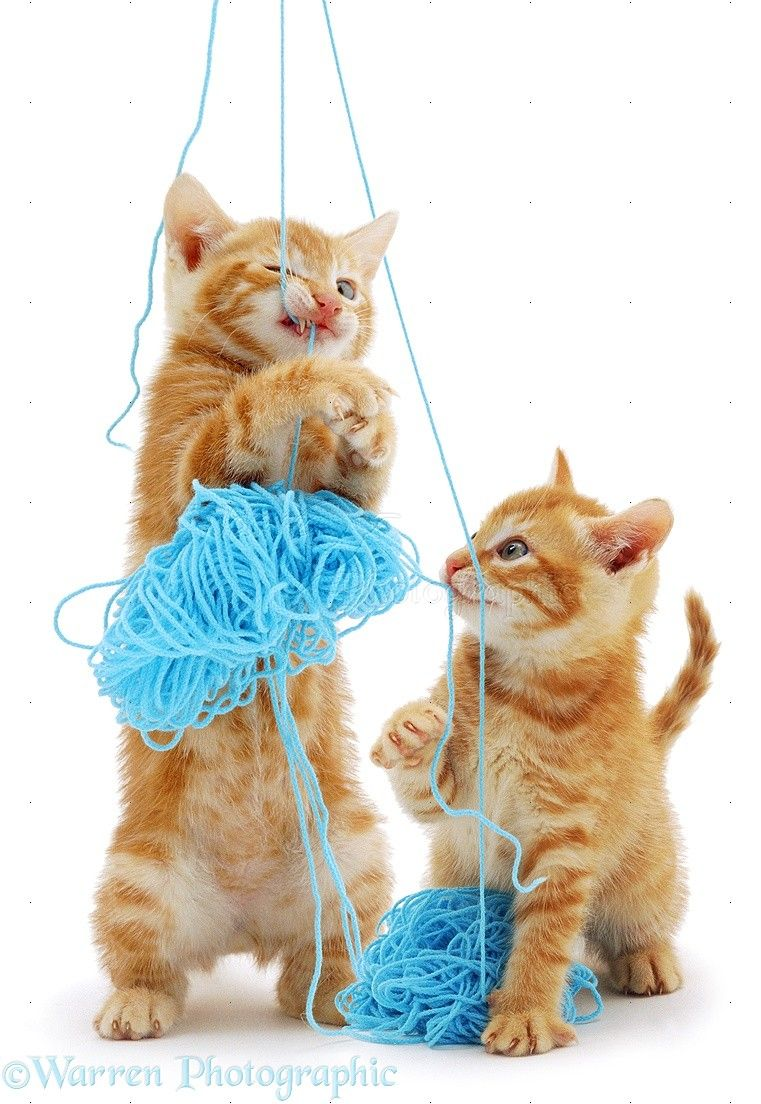 Kittens With Blue Wool Photo Cute Cats And Kittens Kittens Kittens Playing