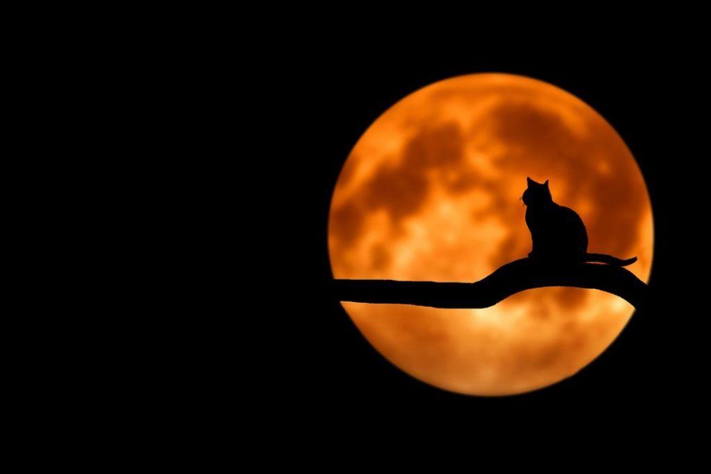 اجمل خلفيات لابتوب كيوت Laptop Wallpapers Hd For Windows 10 Tecnologis Fall Computer Backgrounds Cat Silhouette Cat Pics