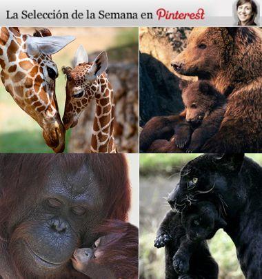 Las imágenes más conmovedoras de madres e hijos del reino animal.