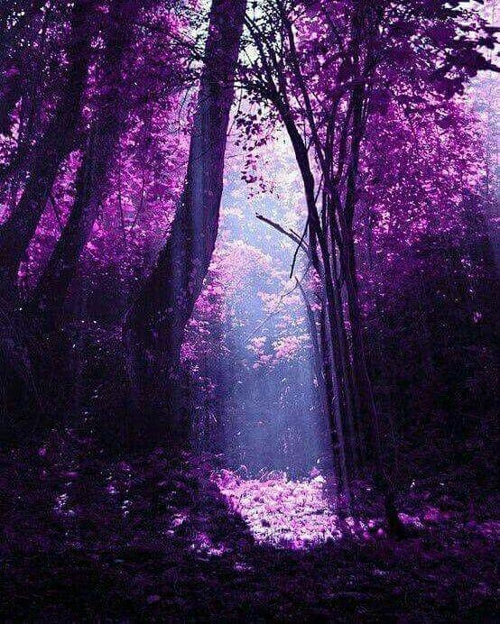 Krasivo Napishite V Kommentariyah Idealno Krasota Priroda Cvet Idea Good Day Dog Green Bab Best B Purple Trees Purple Aesthetic Beautiful Nature