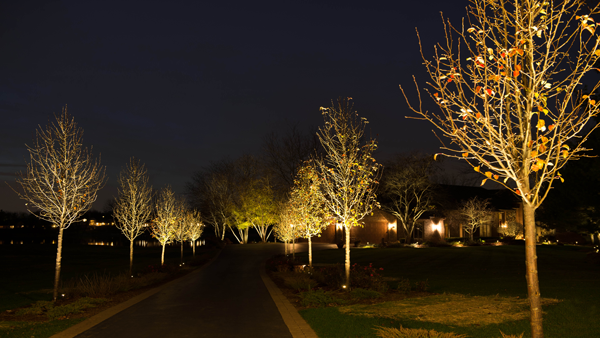 Outdoor Lights Trees: 17 Best images about Outdoor Lighting on Pinterest | Gardens, Trees and The  long,Lighting