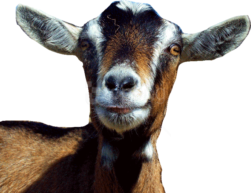 Download Goat Free S Png Images Background Png Free Png Images Goats Png Images Free Png