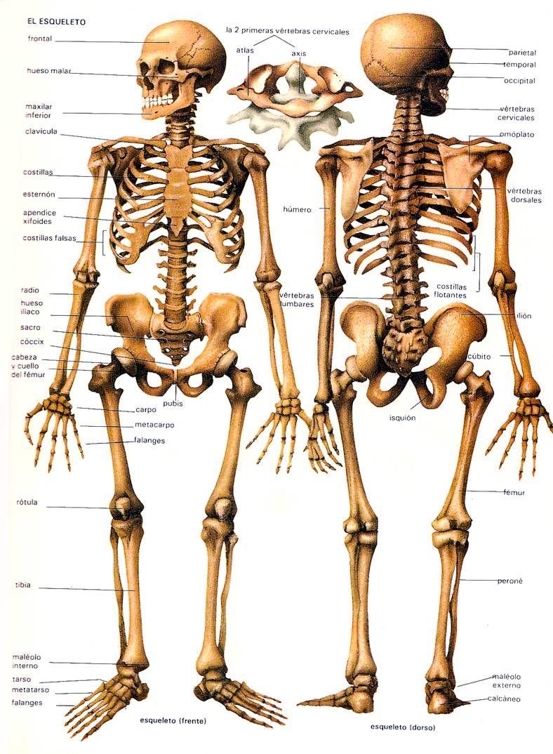 BIODESCODIFICACION | BIODESCODIFICACIÓN | Pinterest | Anatomía ...