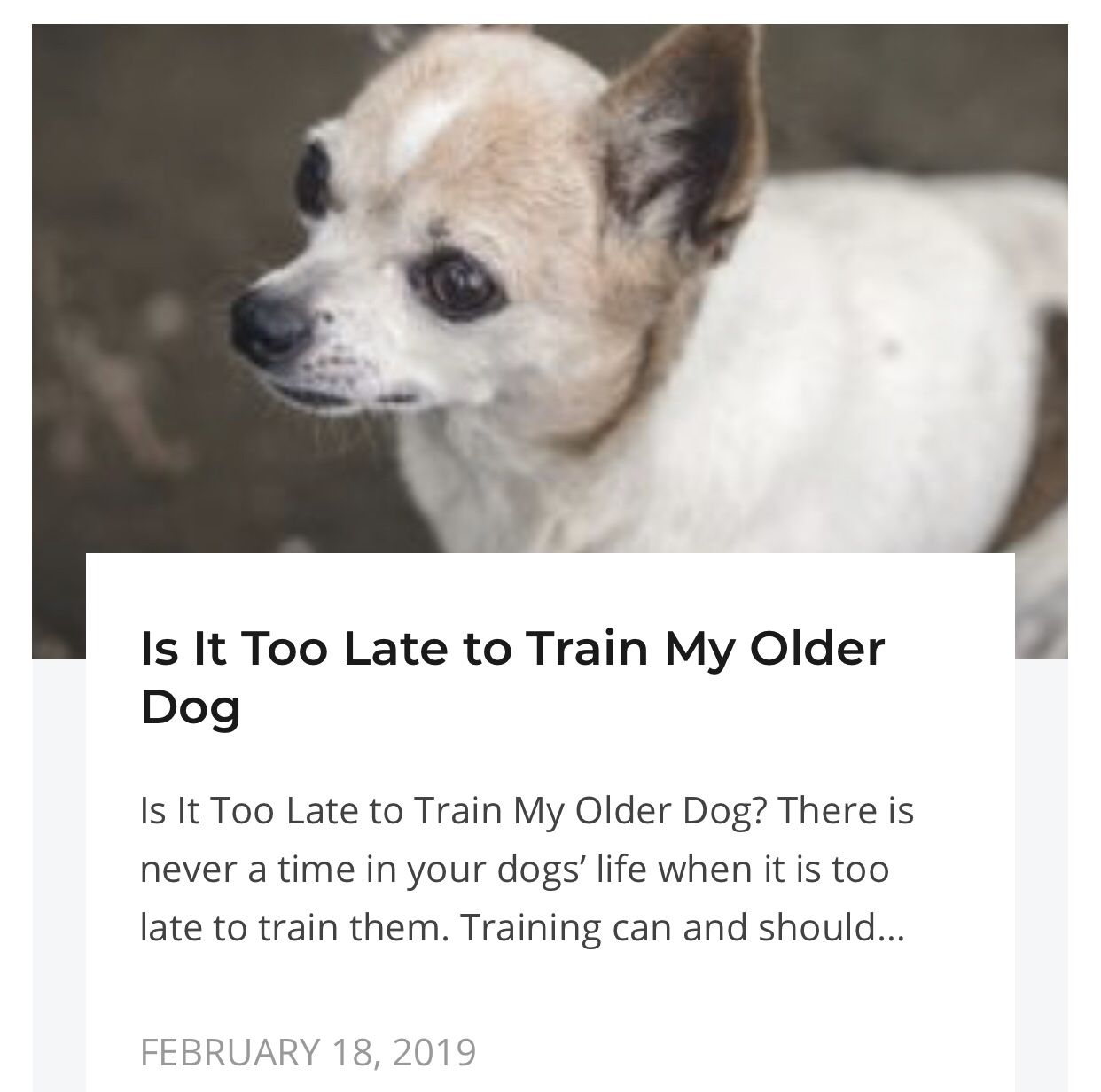 Get Information On Training Older Dogs Dogs Basic Dog Training