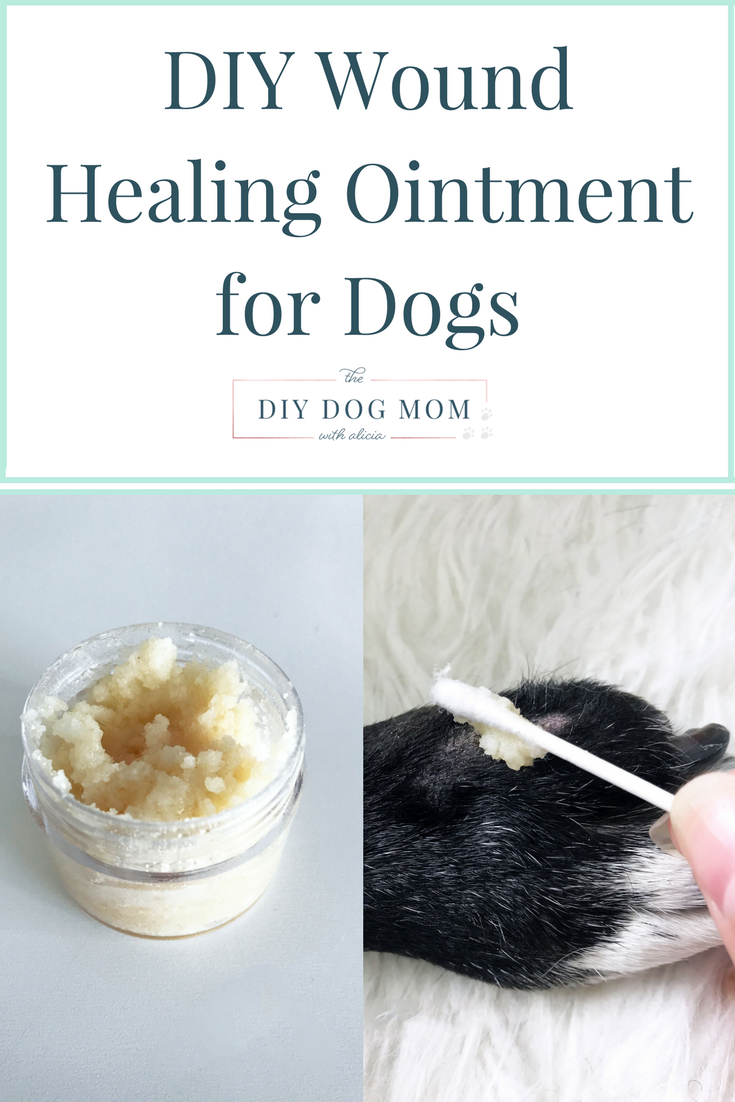 DIY Soothing Wound Cream for Dogs | Pet Ideas or Everything